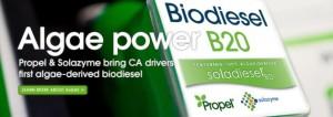 algae biodiesel 2